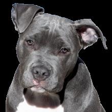 dog-2438803_1920